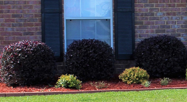 Shrub Trimming - Services – West Mobile Lawn Care