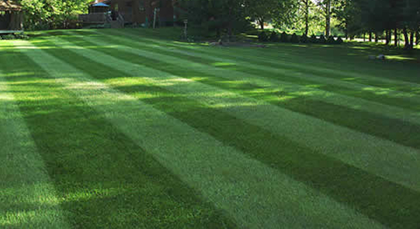 Lawn Care West Mobile AL
